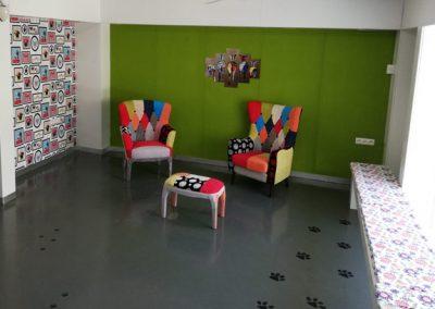 veterinario-estadio-cadiz5