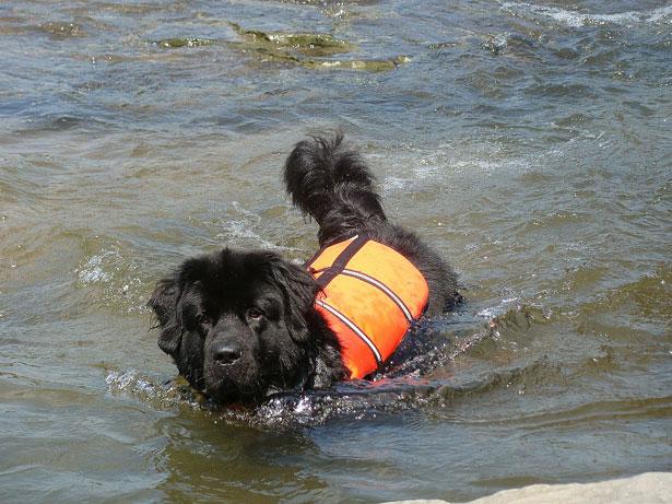 Trabajos de verano: rescate acuáticos en perros