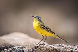 Parásitos en aves