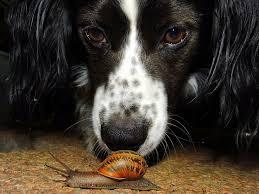 ¿Qué es un gusano pulmonar?