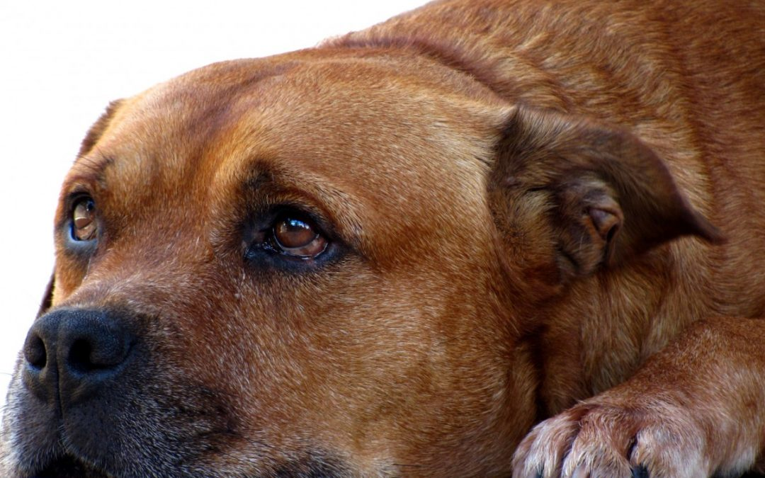 ¿Cómo reconocer el abuso en animales?