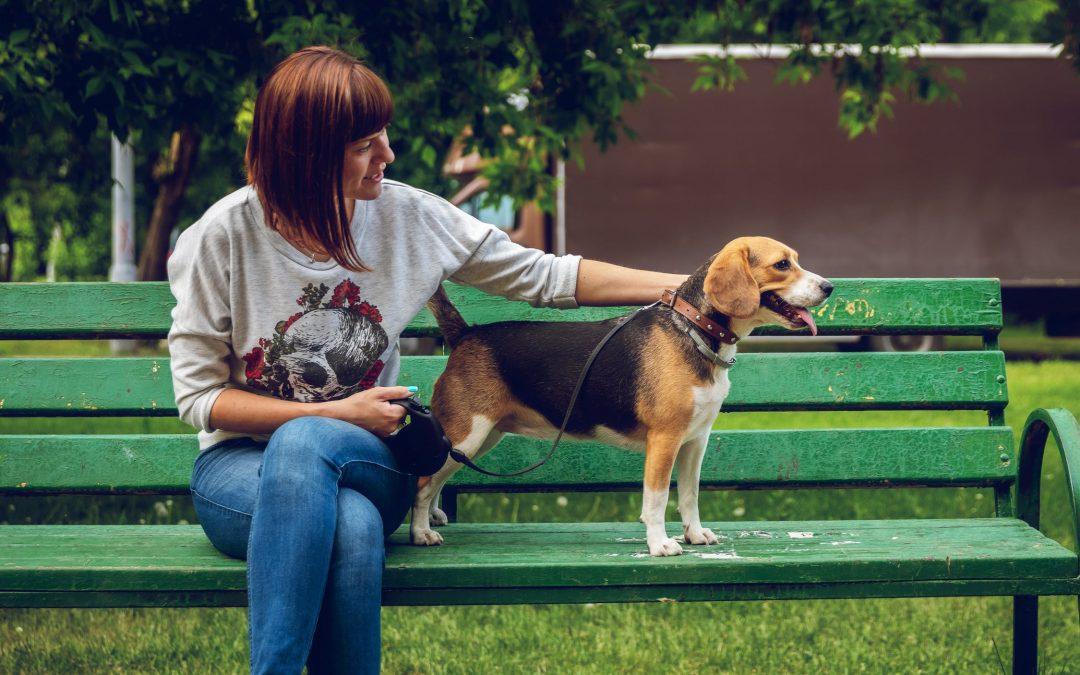 5 formas de hacer que tu perro camine más animado