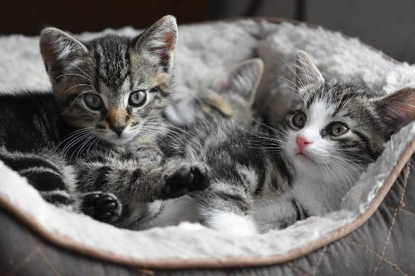 Consejos para recibir a un gatito en tu hogar