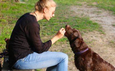 Consejos para alimentar a una mascota
